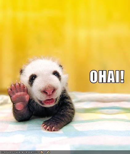 cute,lolpandas,o hai,panda,tiny