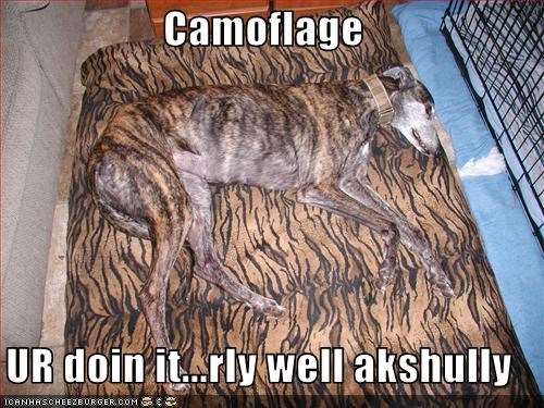 camouflage,couch,doin it rite,whippet