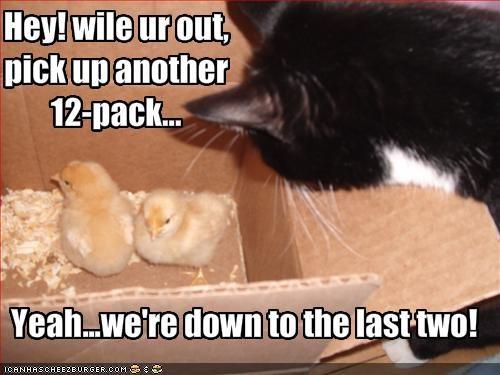 chick fud lolcats lolchick nom nom nom nugget - 1587349248