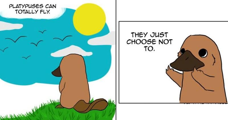 platypus,web comics