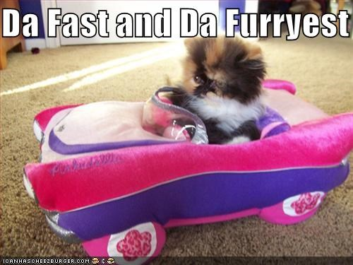 car cute driving kitten movies - 1589761280