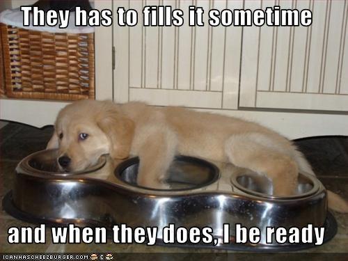 bowl golden retriever puppy waiting - 1590966016