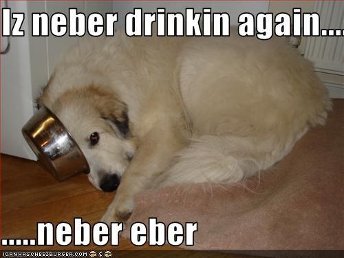 Cheezburger Image 1591598848