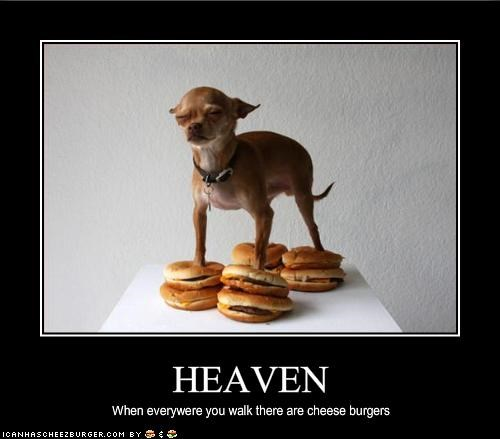 cheezburger chihuahua heaven walk - 1592656128
