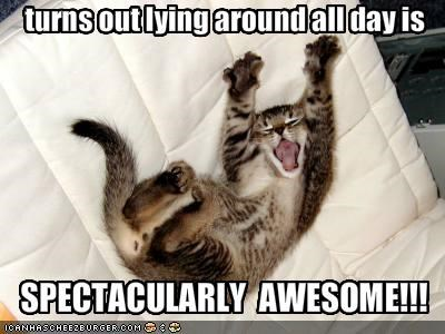 cute kitten lazy sleepy - 1593546496