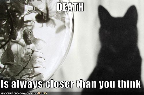 Death fish lolcats lolfish murder nom nom nom threats - 1593769216