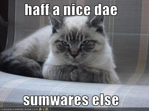 advice angry lolcats mean - 1595029760