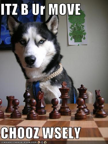 chess,malamute,playing,smart