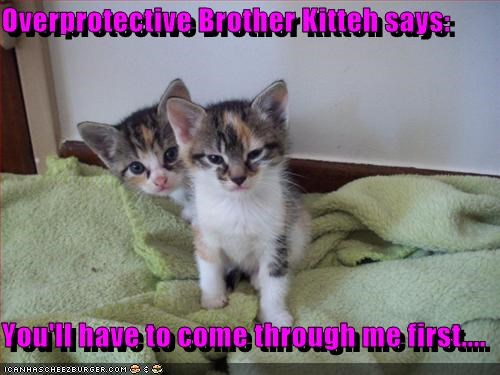 brother,cute,kitten,security system,siblings
