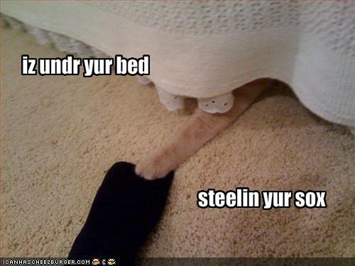 bed lolcats plotting socks stealing - 1596964096