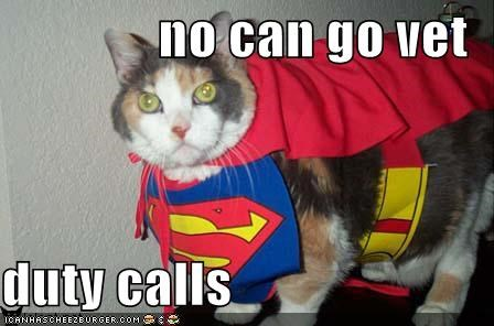 costume,excuses,lolcats,supercat,vet