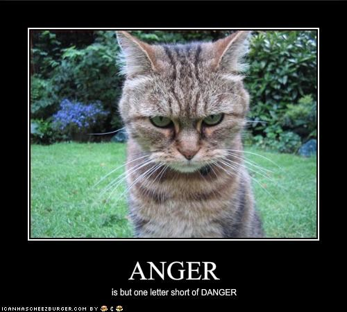 angry danger lolcats threats - 1598388992