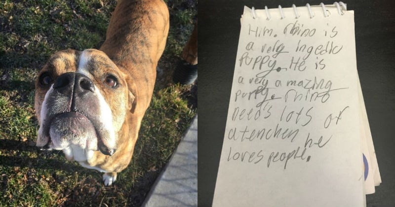 dogs adoption note humane society sweet heartbreaking - 1598981