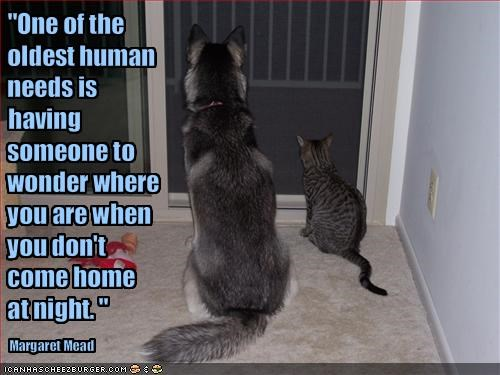 dogs friends lolcats loldogs love quote waiting - 1599599360