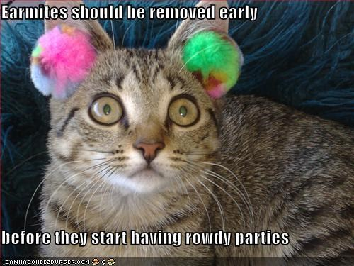earmites,lolcats,oh noes,parties