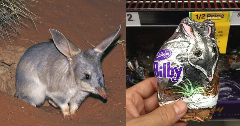 Bilby Australian Easter bunny