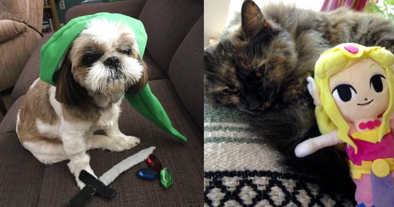 pets list cute nintendo animals - 1600261