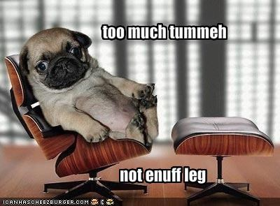 chair googly eyes legs posing pug stubby tummy - 1601338112
