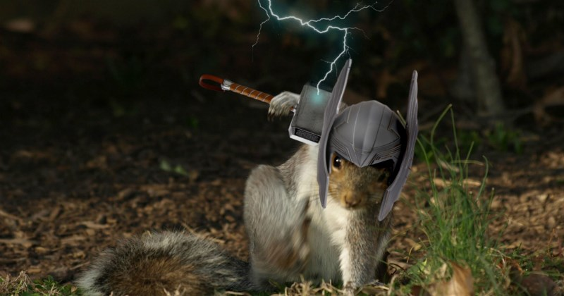 photoshopping a funny squirrel