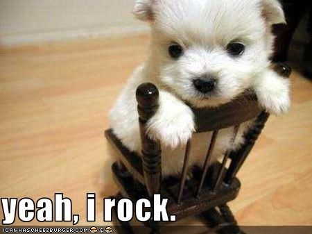 cute maltese puppy - 1602418432