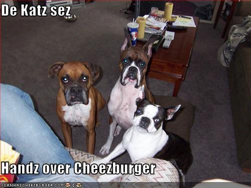 Cheezburger Image 1603788544
