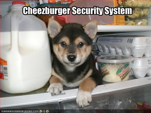 australian shepherd cheezburger cute fridge puppy security - 1604192000