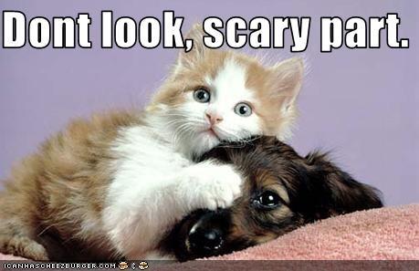 cute dogs kitten lolcats loldogs lolkittehs Movie scared - 1606505216