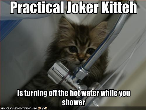 cute,kitten,mischief,prank,shower