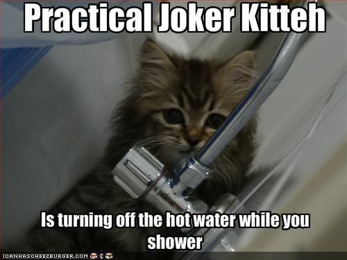 cute kitten mischief prank shower - 1608034048