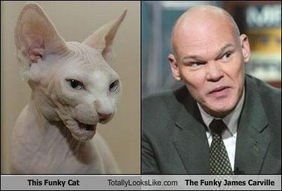 animals,Cats,hairless cats,James Carville,politics