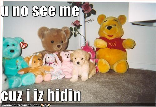 hiding stuffed animal whatbreed