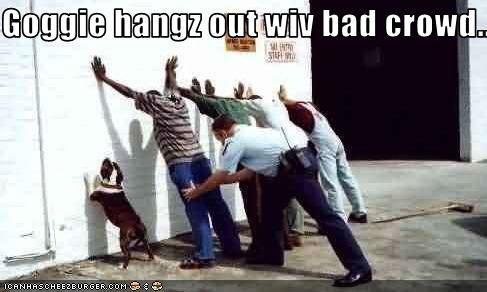 bad dog bulldog outdoors police wall - 1610848512