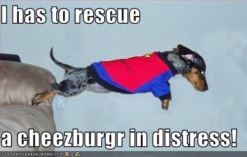 Cheezburger Image 1611458816