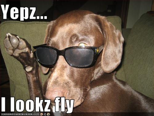 labrador sunglasses - 1611892480