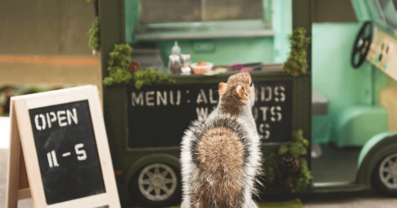list squirrel cute animals - 1612805