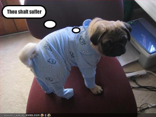 costume,cute,pug,threats