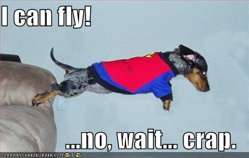 costume dachshund FAIL flying superdog