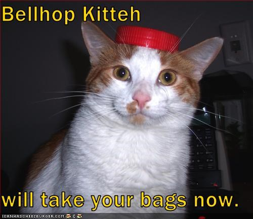 bellhop costume hat helping hotel lolcats suitcase - 1614986496