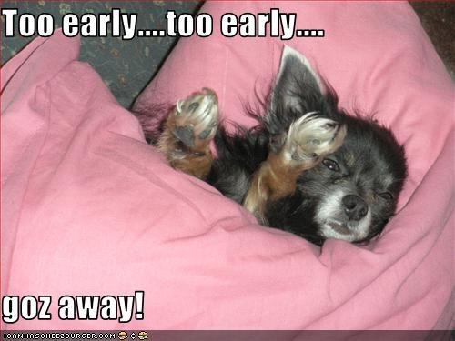 cute puppy sleeping whatbreed - 1616469248