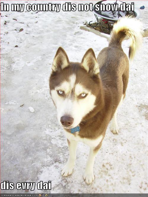 husky snow tough - 1616897280