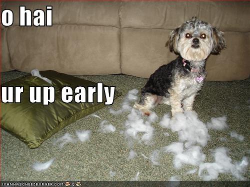 couch destruction FAIL maltese Pillow - 1617468672