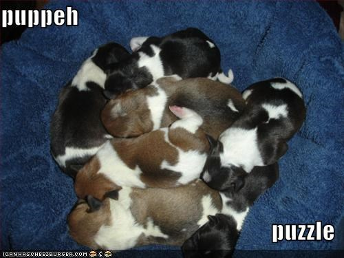 puppy puzzles whatbreed - 1617758464