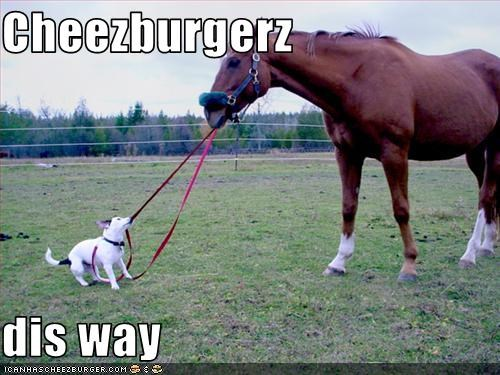 Cheezburger Image 1617865984