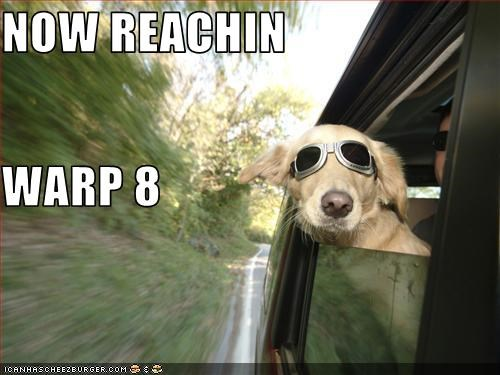 car,driving,fast,labrador,sunglasses,windows