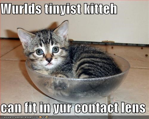 Wurlds tinyist kitteh   can fit in yur contact lens