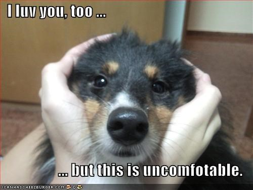love sheltie uncomfortable - 1621302528