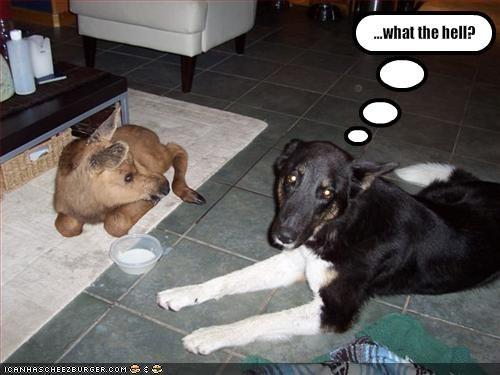 confused labrador - 1624026880