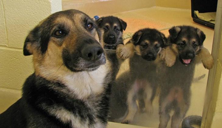 dogs,list,cute,animals