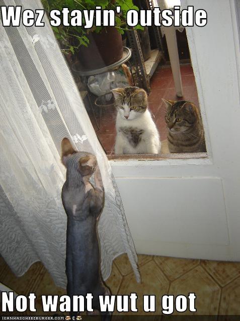 do not want doors hairless outside sick windows - 1625316608