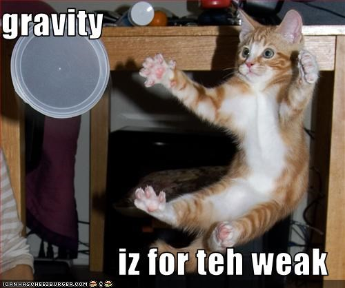 cute,Gravity,kitten